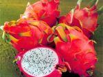 Екзотичні фрукти: чим корисні та як їх їсти