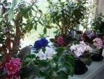 Як правильно доглядати за кімнатними рослинами