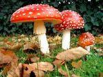 Що робити при отруєнні грибами
