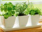 Як вибрати кімнатні рослини. Правила розміщення рослин в будинку