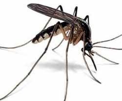 Як захиститися від комарів