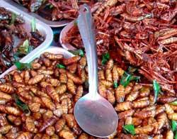 Екзотичні страви з комах