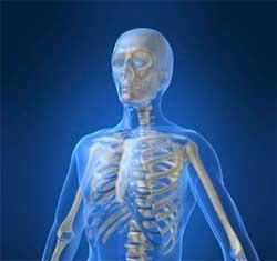 Скільки кісток у людини