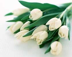 Кому, як і які дарувати квіти