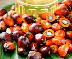 Як визначити наявність пальмової олії в різних продуктах